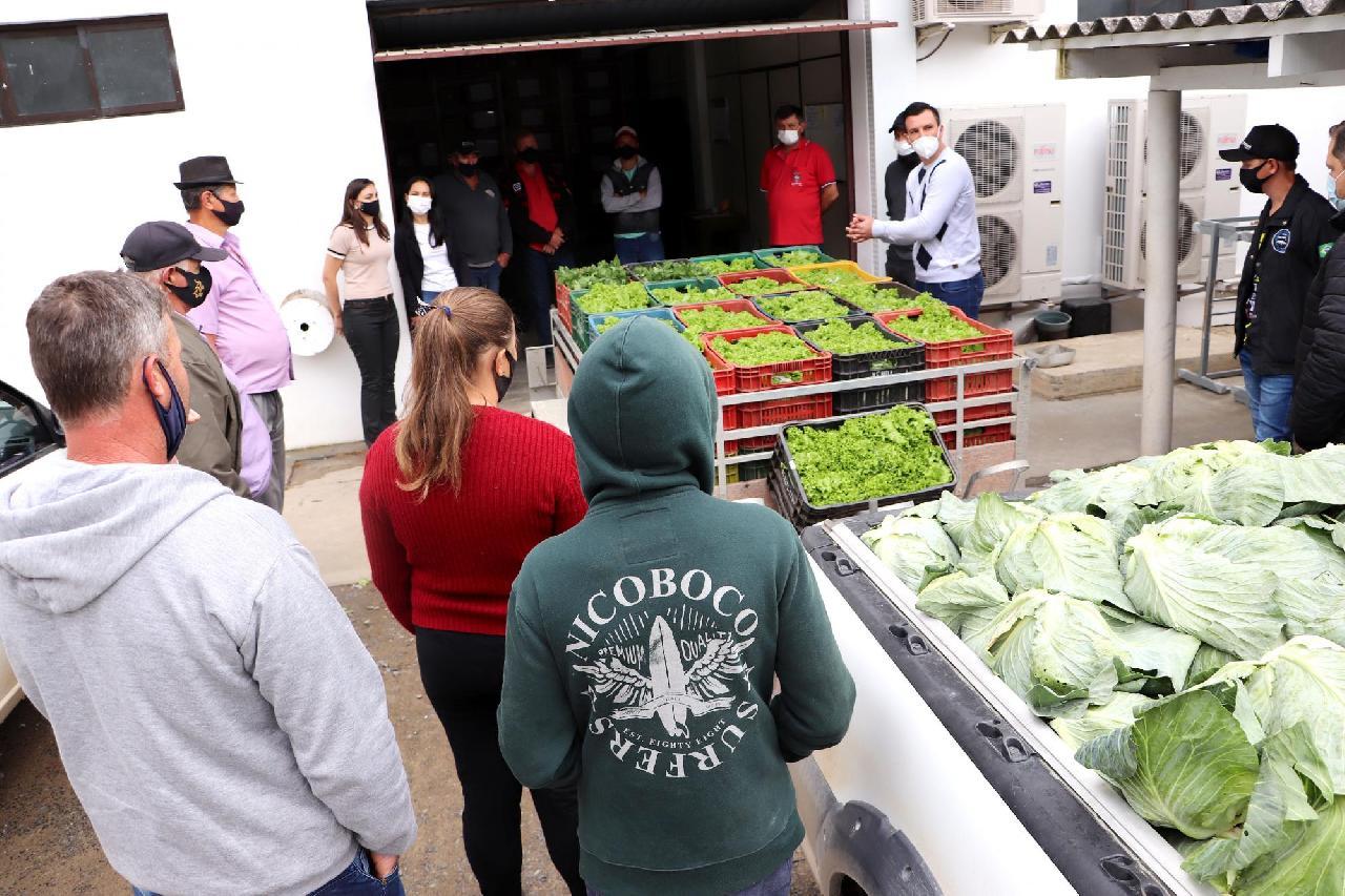 """Alunos da rede municipal recebem """"Cesta Verde"""" com alimentos frescos"""
